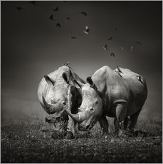 Muursticker  Two Rhinoceros with Birds - Johan Swanepoel