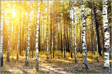 Gallery print  birch trees in a autumn forest