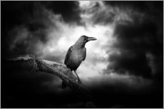 Gallery print  Raven in the moonlight