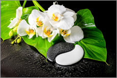 Gallery print  White orchids and Yin-Yang stones