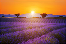 Gallery print  Sun over lavender