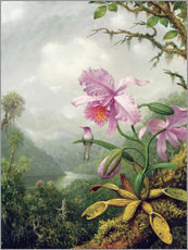 Muursticker  Hummingbird Perched on an Orchid Plant - Martin Johnson Heade