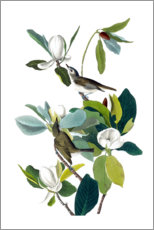 Acrylglas print  Two birds with magnolia - John James Audubon