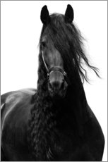 Gallery print  Black horse - Finlay and Noa