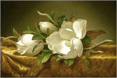 Gallery print  Magnolias on Gold Velvet Cloth - Martin Johnson Heade