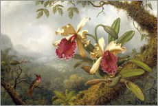 Gallery print  orchids and hummingbird - Martin Johnson Heade