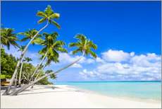 Gallery print  White beach and palm trees in the tropics - Jan Christopher Becke