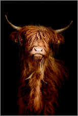 Acrylglas print  Scottish highland cattle - Art Couture