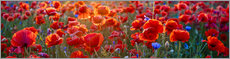 PVC print  Poppy field - red dominance - Art Couture