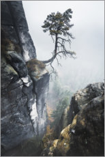 Premium poster Old pine trees in the Elbe Sandstone Mountains