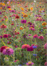 Muursticker The colorful wild flowers of France