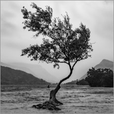 Premium poster Lonely tree defies the weather