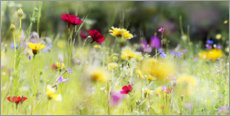 Acrylglas print  Wildflower meadow in bloom - Lichtspielart