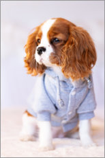 Hout print  Puppy in a jogging suit - Janina Bürger
