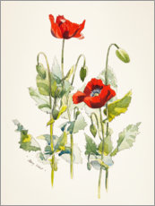 Muursticker  Papaver aquarel - Mary Want