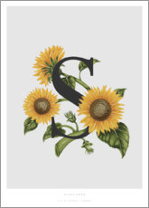 Canvas print  S is for Sunflower - Charlotte Day