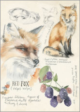 Acrylglas print  Red Fox & Blackberries - Jennifer Parker