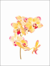 Hout print  Yellow orchid