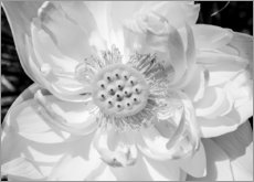Hout print  Lotus flower in black and white