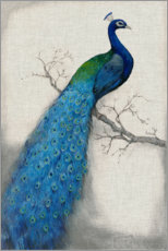 Canvas print  Peacock Blue I - Tim O'Toole