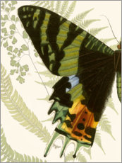 Premium poster Butterfly symmetry I