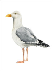 Canvas print  Gull - Grace Popp