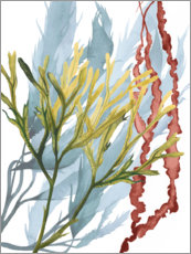 Canvas print  Sea plants II - Grace Popp