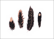Premium poster Ink and rose gold feathers
