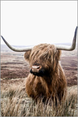 Acrylglas print  Brown highland cattle - Art Couture