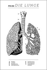 Acrylglas print  Lungs Vintage Diagram (German) - Wunderkammer Collection