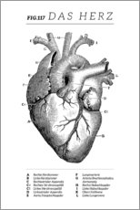Canvas print  Heart Vintage Diagram (German) - Wunderkammer Collection