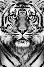 Acrylglas print  Majestic Tiger - Sisi And Seb