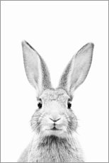Premium poster Curious rabbit