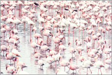 Acrylglas print  Flamingo flock - Sisi And Seb