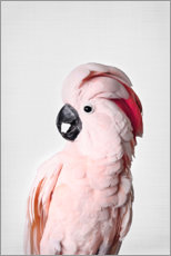Canvas print  Pink parrot - Sisi And Seb