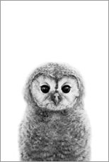 Acrylglas print  Young owl - Art Couture