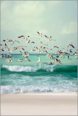 Premium poster Seagulls on the beach