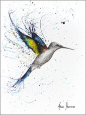 Canvas print  Happy Hummingbird - Ashvin Harrison