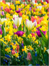 Acrylglas print  Multi-colored flowers in spring - Terry Eggers