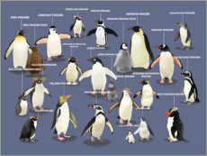 Canvas print  Penguin species (English) - Marc Pattenden