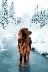 Gallery print  Troja in the Frostpine Forest - The secret life of Troja