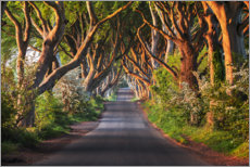 Aluminium print  Tree avenue in the first morning light - The Wandering Soul