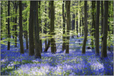Muursticker  Blue sea of flowers in the forest with light - The Wandering Soul