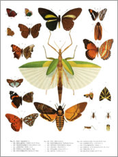 Acrylglas print  Color splendor of insects IIX - Wunderkammer Collection