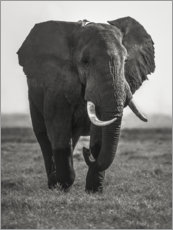 Gallery print  Portrait of an elephant - Roelof de Hoog