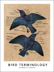Premium poster Terms of ornithology (English)