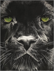 Acrylglas print  Panthers face - Rose Corcoran