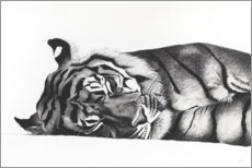 Acrylglas print  Sleeping tiger - Rose Corcoran