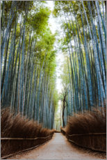 Acrylglas print  Bamboo forest in Kyoto - Matteo Colombo