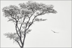 Premium poster Lonely tree and eagle